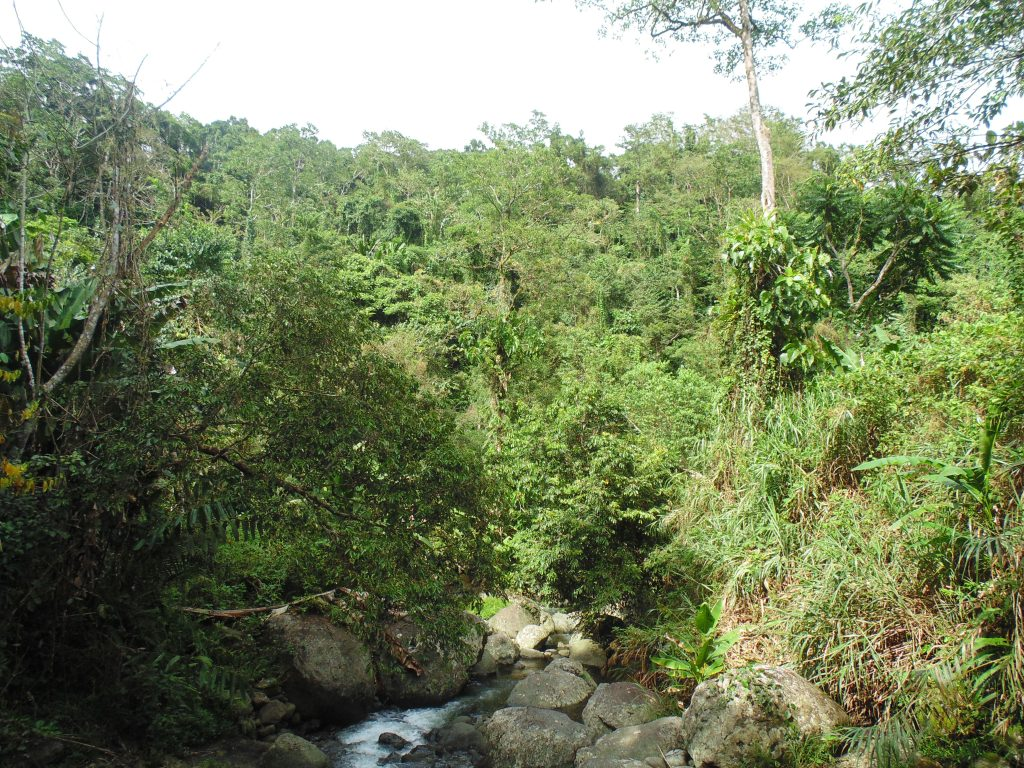 Dense dipterocarp forests cover the lower slopes of Mt Binaratan