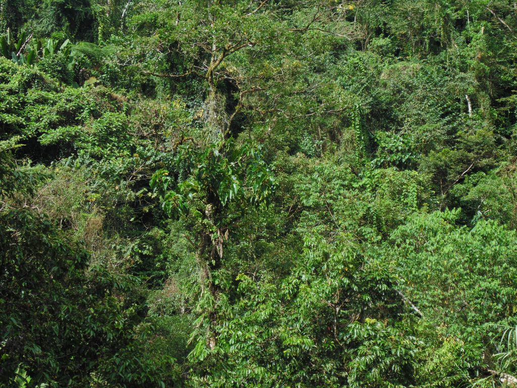 Dense forests of Maducayan, Natonin