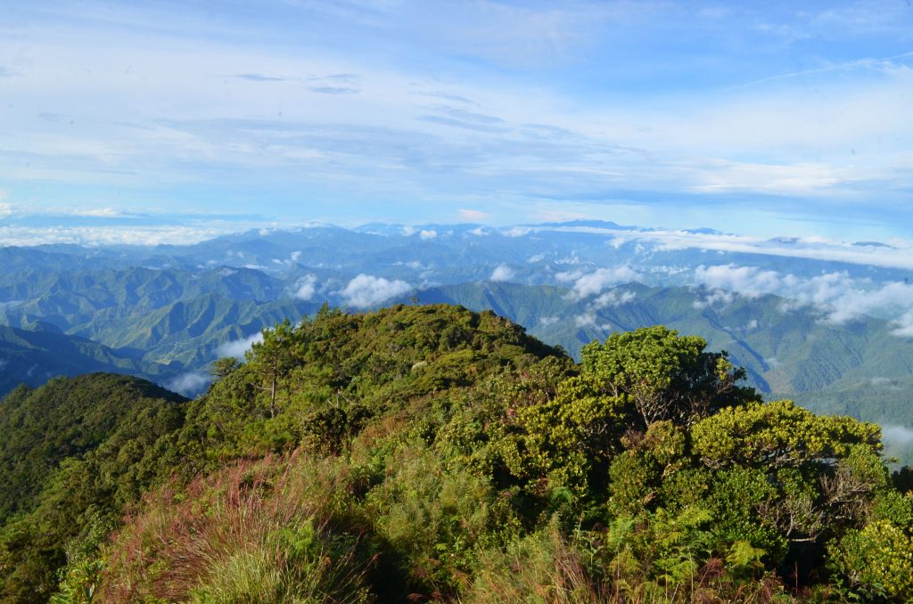 Behold the lush Cordilleran forests as seen from Mt Amuyao