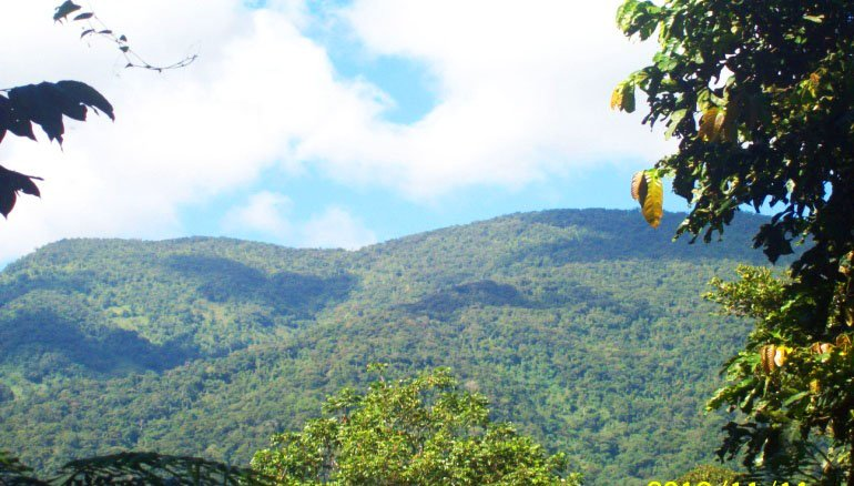 A partial view of the forested slope of Mt Binaratan in Maducayan