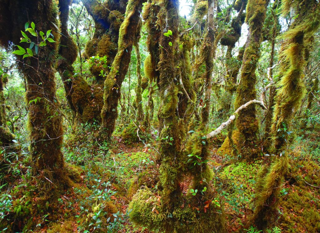 Sayang Mossy Forest is one of the best mossy forests in the Philippines