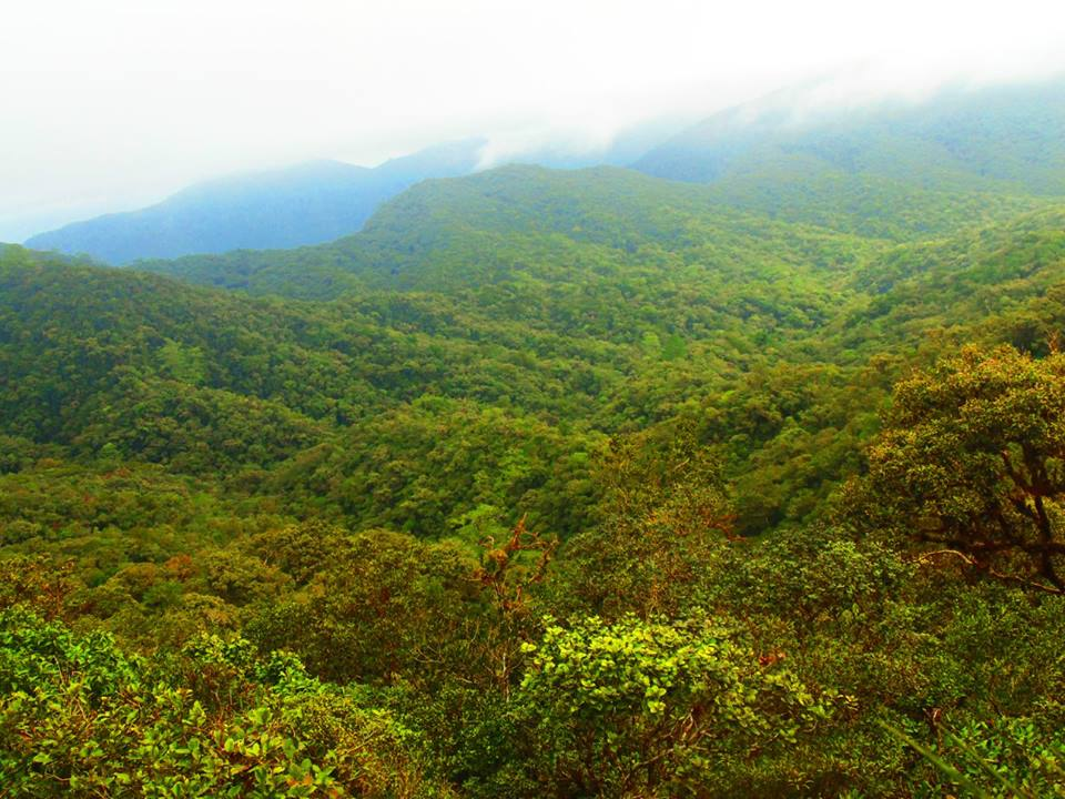 Sayang Mossy Forest is one of Northern Luzon Tourist Spots