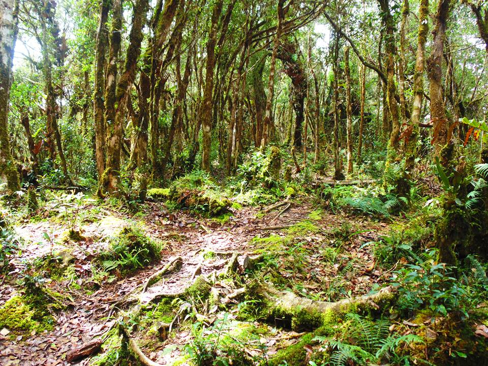 Mossy forests at Lake Tufub, Barlig.