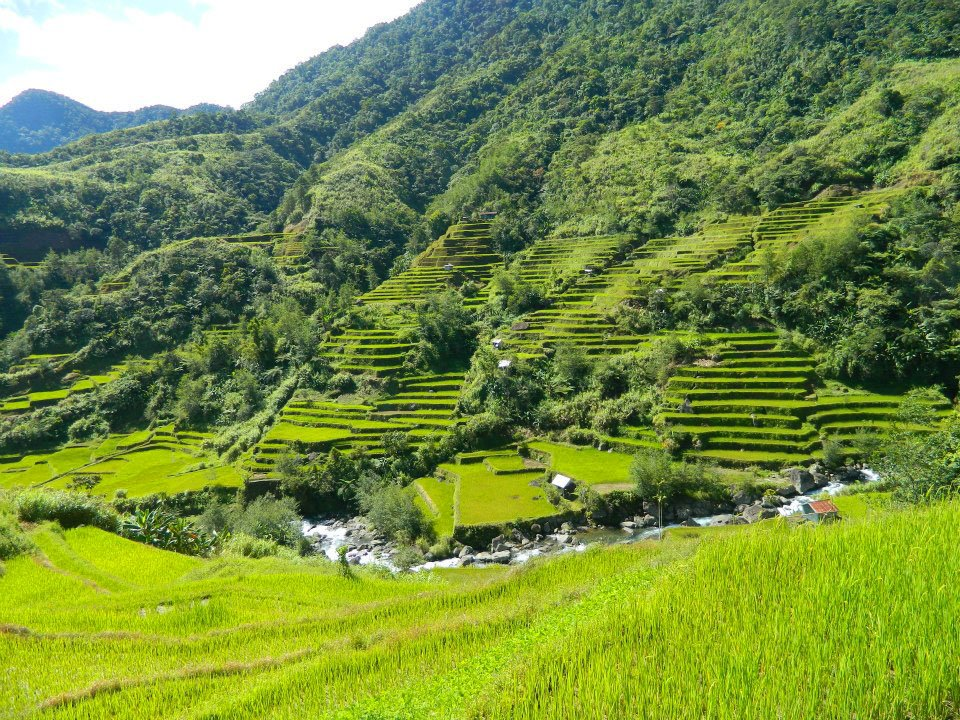 Naculla Rice Terraces in the Philippines