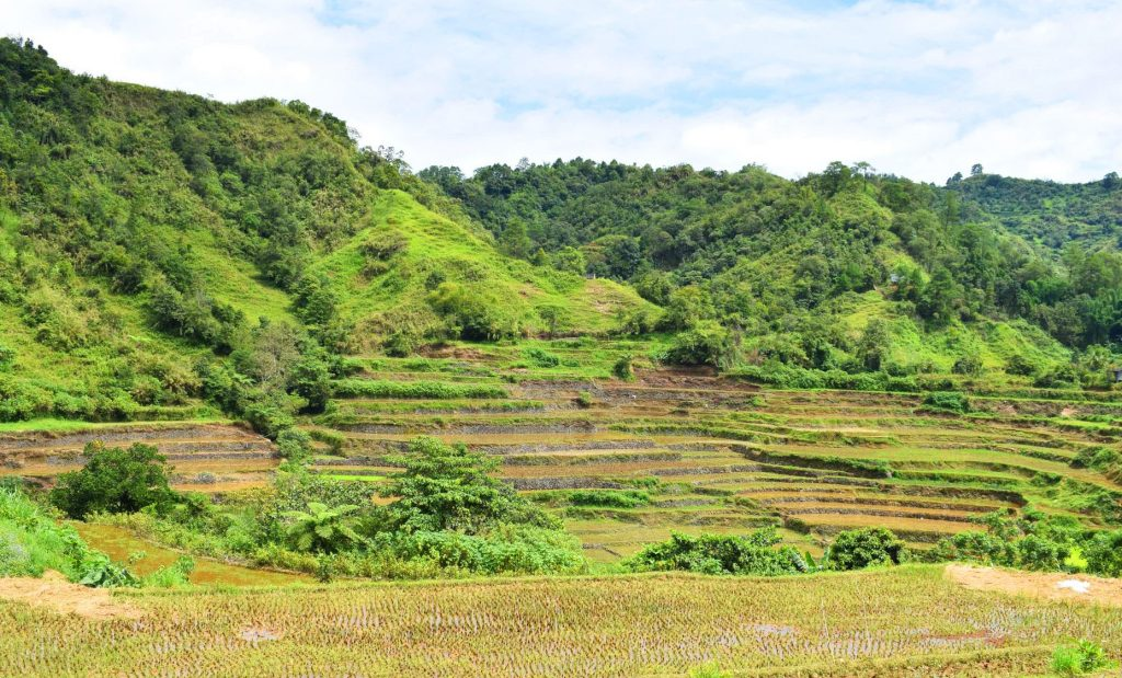 Stone-walled terraces of sitio Togoy, Baayan, Tublay.