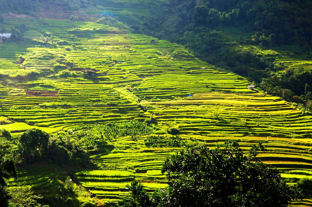Nagacadan Rice Terraces of Kiangan. One of the tourist spots of Ifugao.