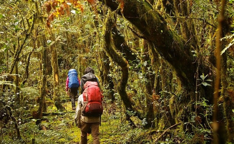 Into the mossy forests of Mt. Kalawitan.