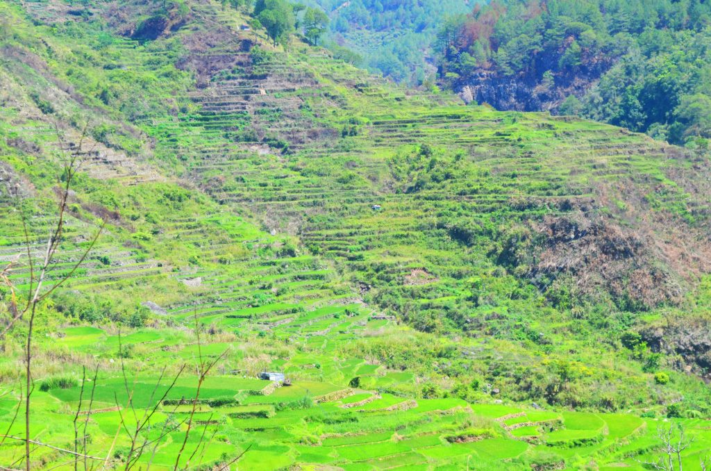 Another stunning view of Sagada rice terraces as seen along the way to Bomod-ok falls.