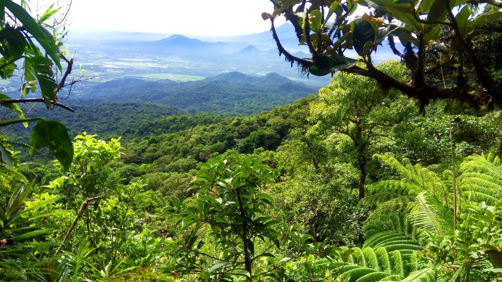 Partial view of the forest of Mt Makiling