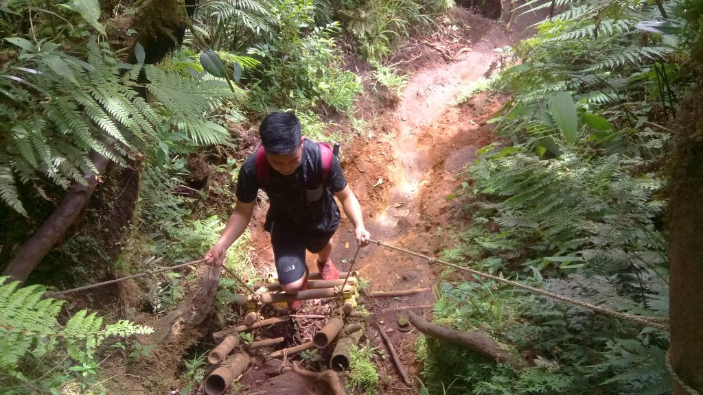 A ladder on the way to Mt Makiling