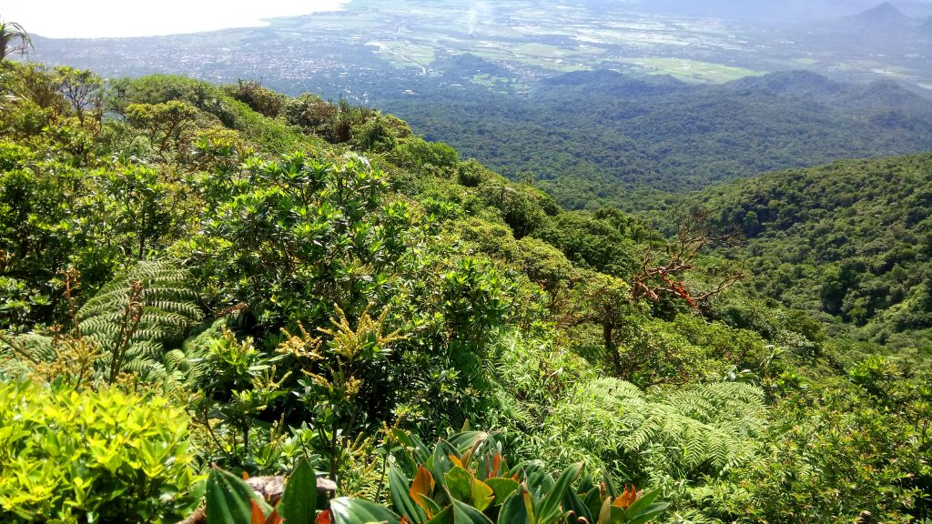 View of the forest as seen from Mt Makiling's peak