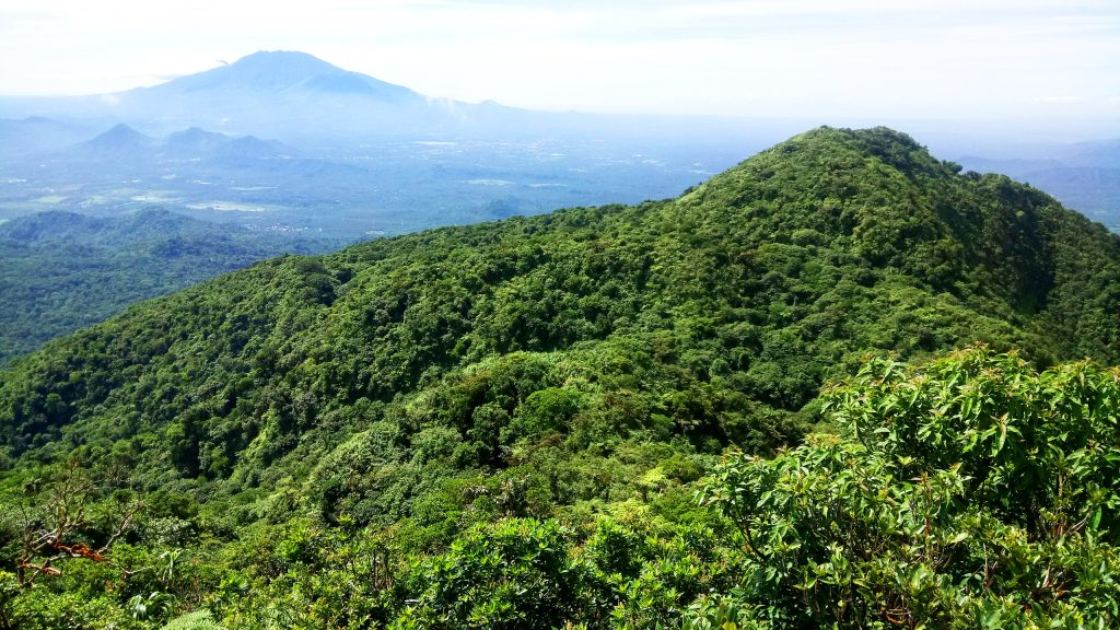 View of the forest and the distant Mt Banahaw as seen from Mt Makiling's peak