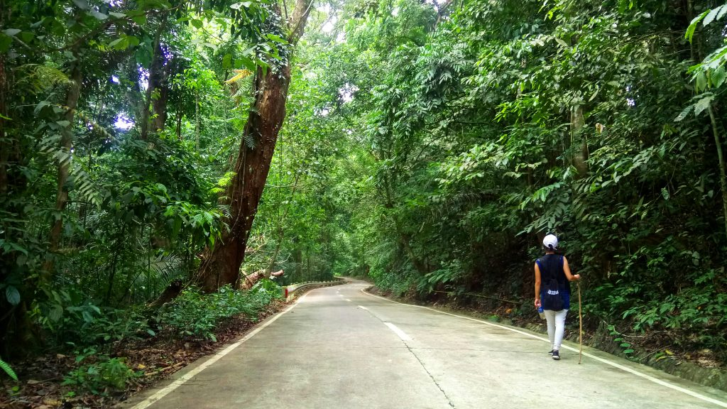 The cemented trail leading to Mt Makiling.