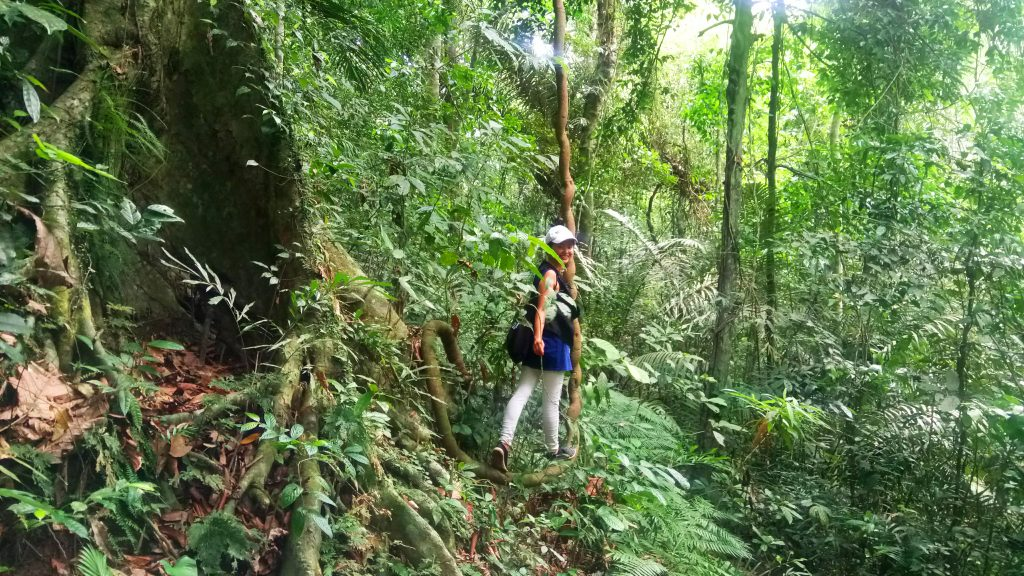 Forest bathing on the lower slopes of Mt Makiling