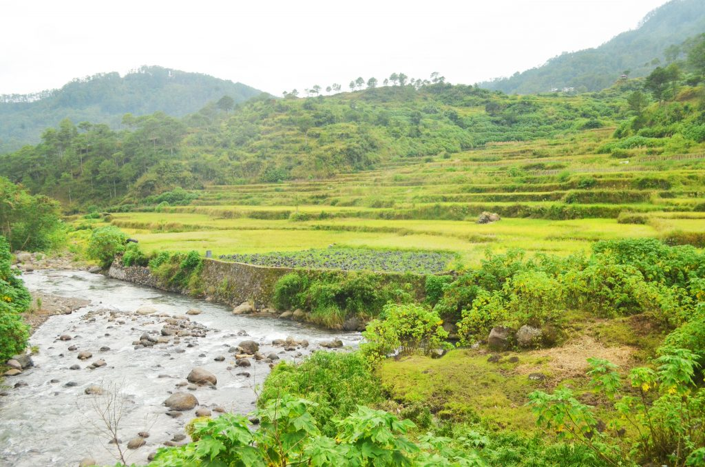 Rice terraces in Ankileng Sagada
