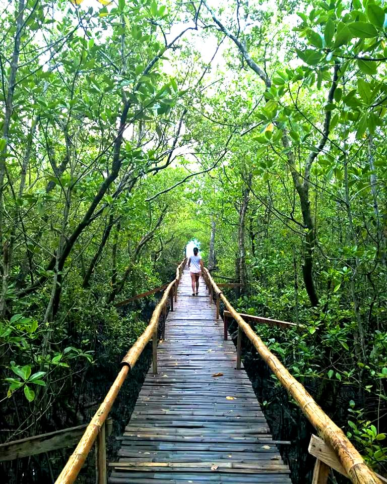 Pawa Mangrove Park is one of the best tourist spots/attractions in Masbate province