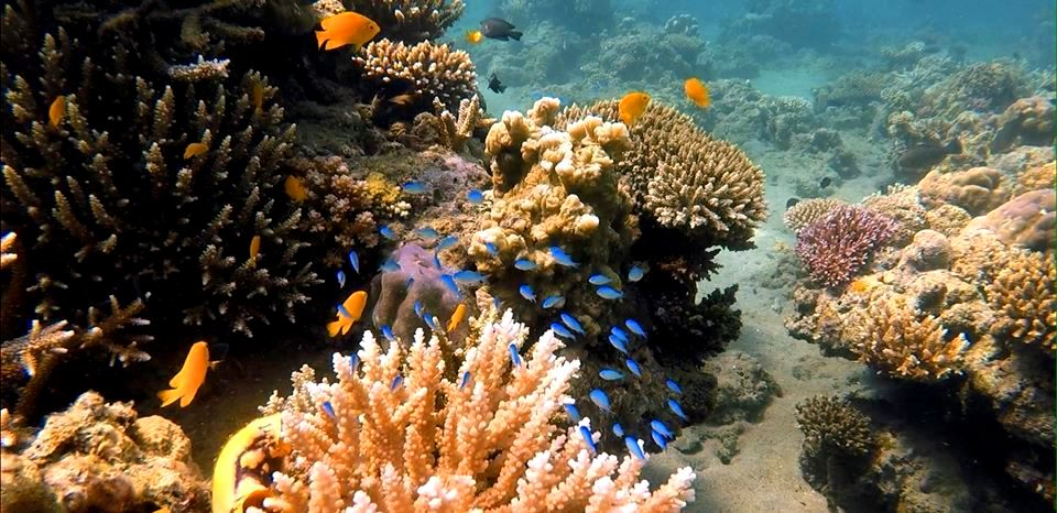 Anilao Marine Protected Sanctuary is one of the famous tourist spots/attractions in Batangas province.