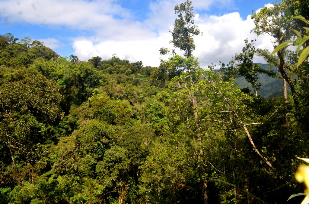 Sierra Madre National Park is one of the last primary forests in the Philippines